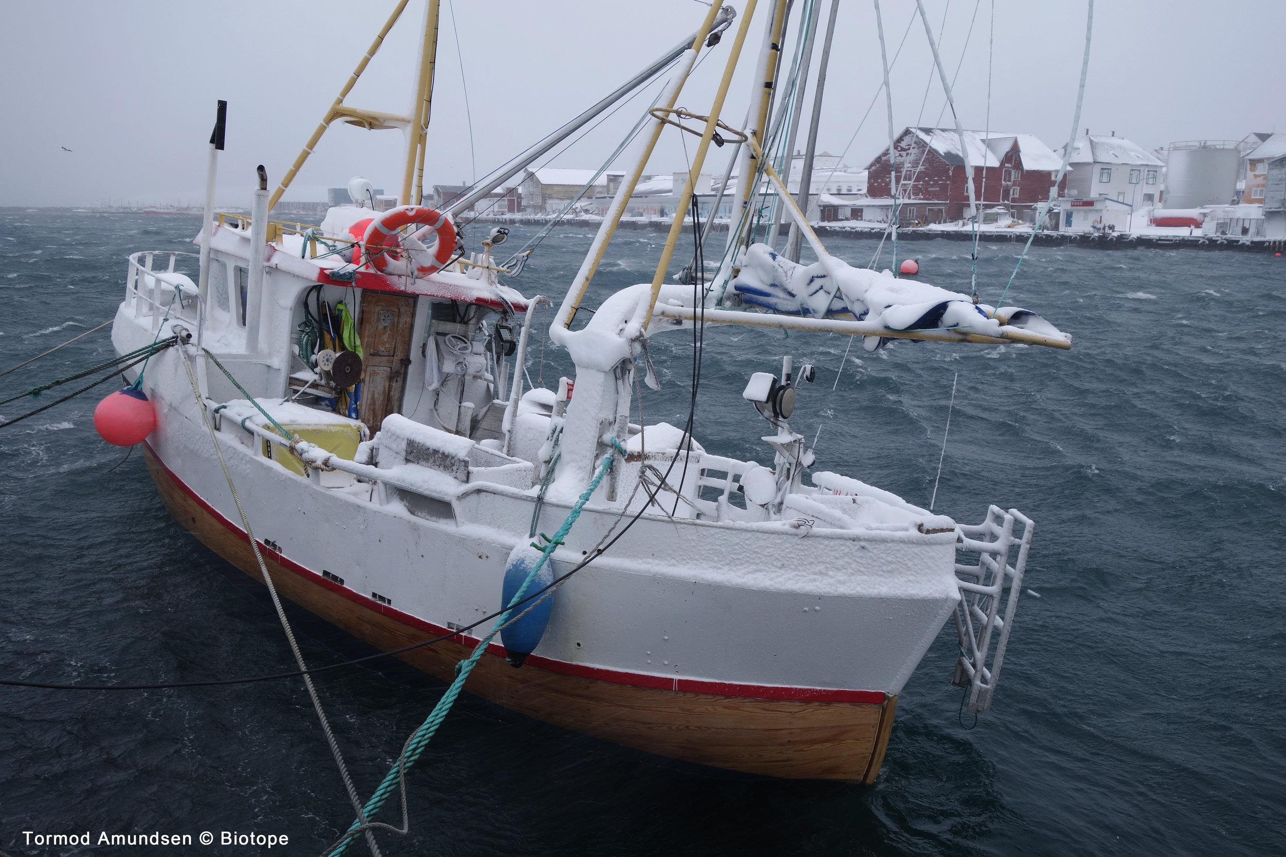 Vardø er først og fremst en fiskerikommune. Fiskeri er en hovednæring i Vardø og selv om kystflåten i Vardø er liten i forhold til tidligere tider er fortsatt fiskebåtene som går ut og inn av Vardø havn et karaktertrekk ved byen.