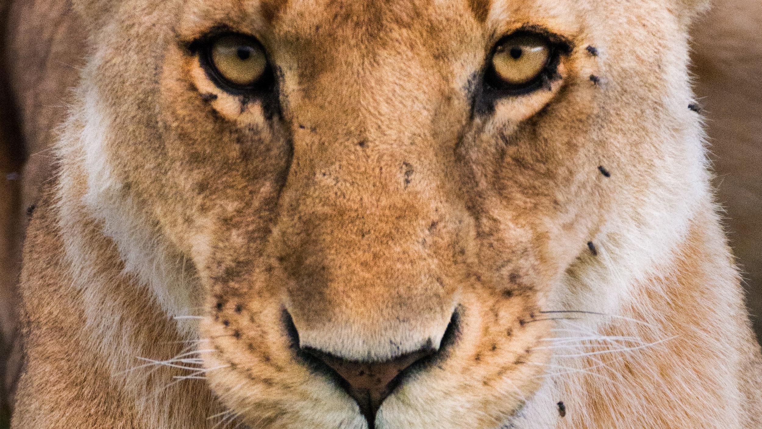 Lasting Footprints - wildlife conservation initiative