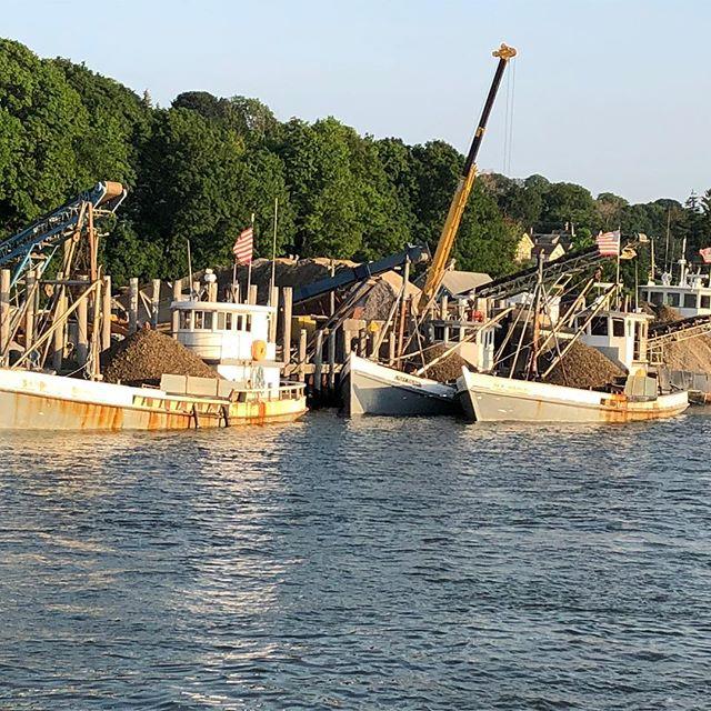 Spawning season!  #shelling #coppsislandoysters #oysters #farmlife #farmtotable #oystermen