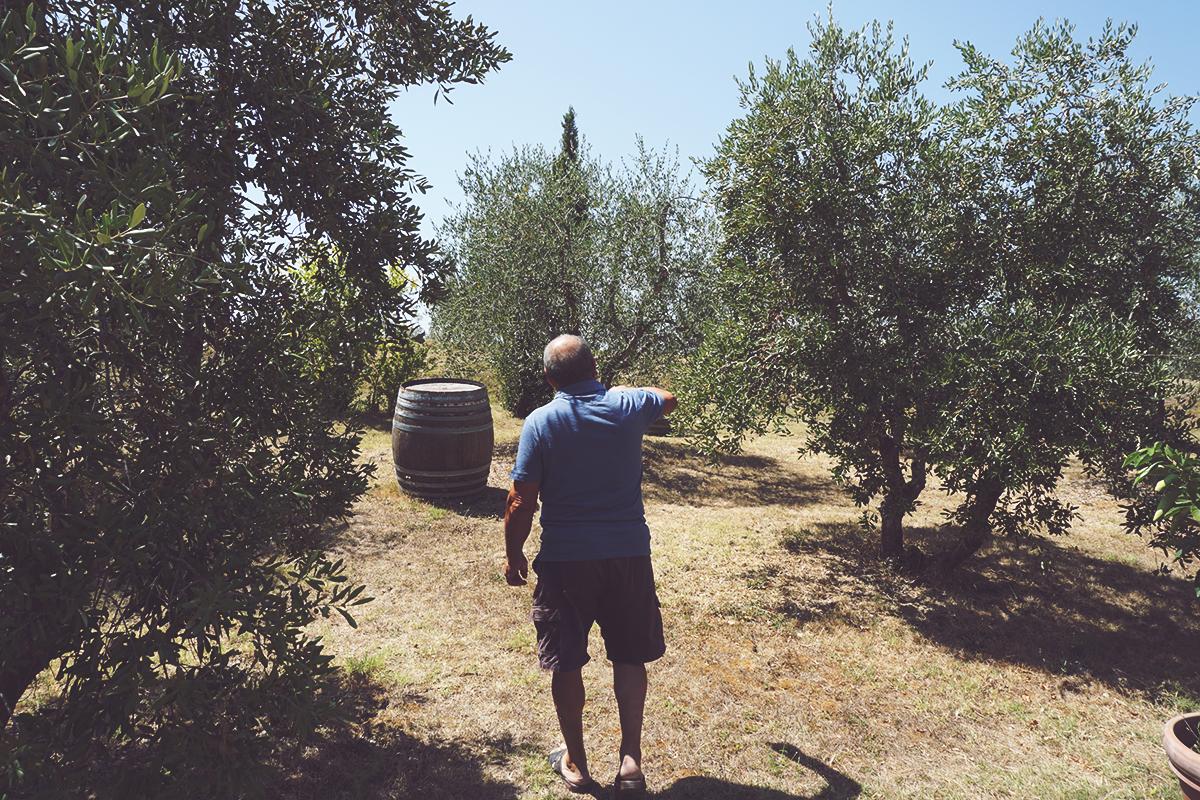 Giovanni Ammirabile cammina nel suo oliveto.