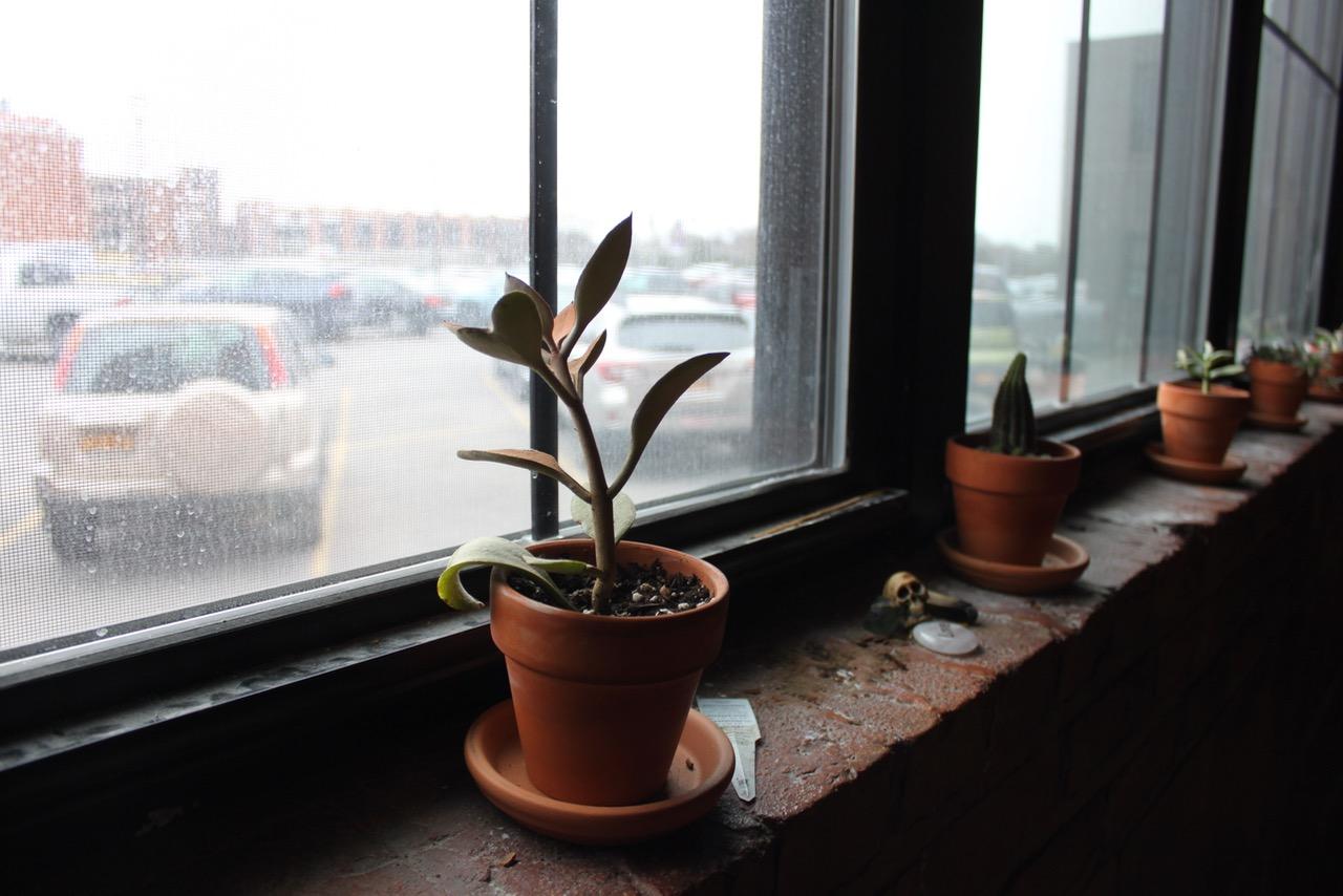 Pele-Plants.jpg