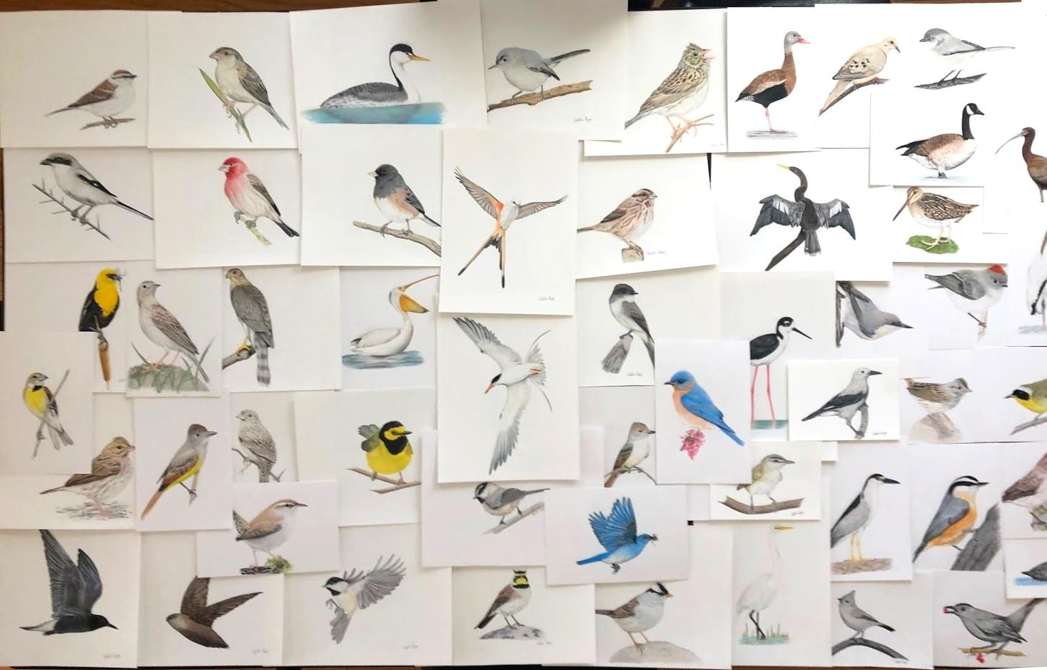 Wingspan illustrations - Natalia Rojas