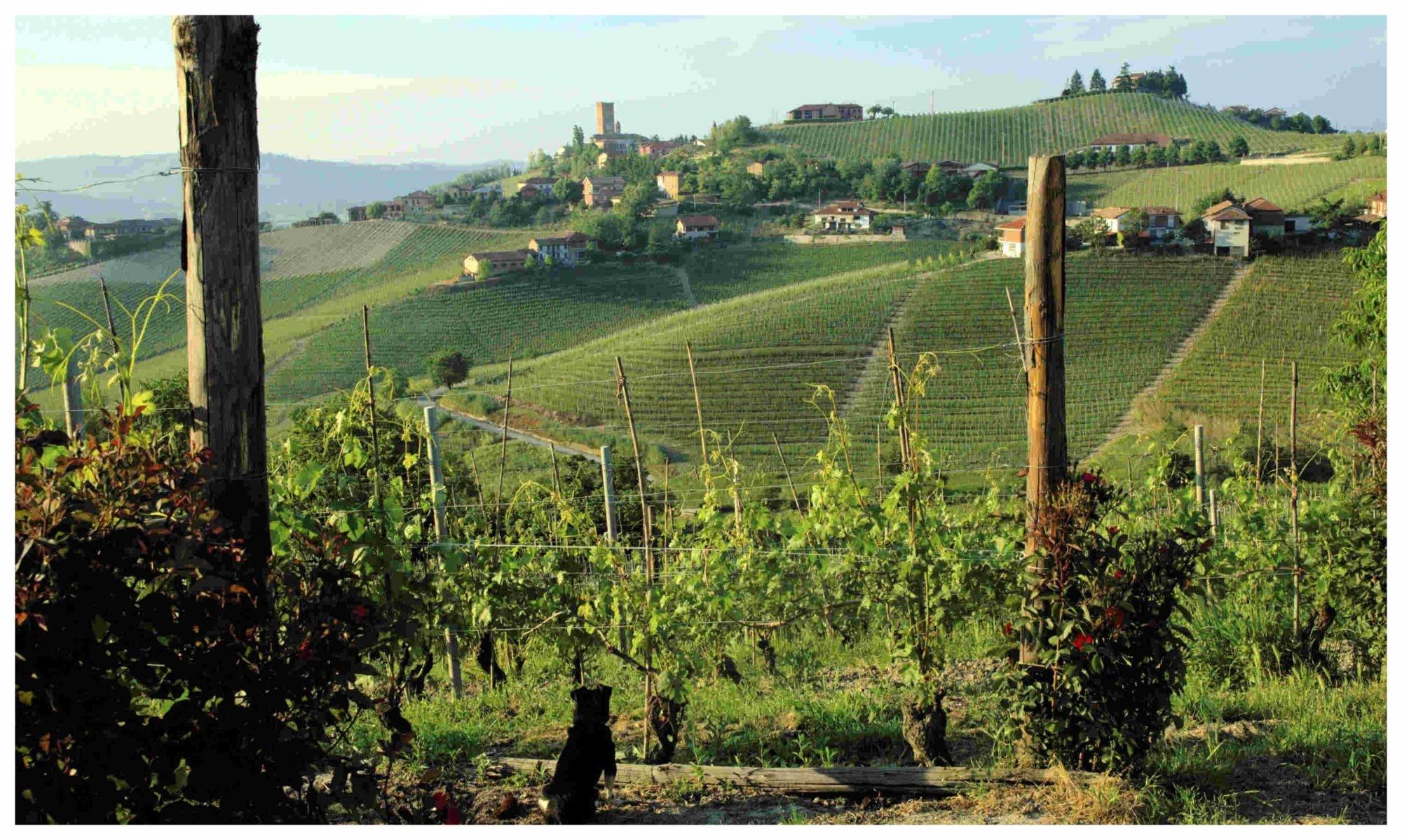 cropped-anche_il_piccolo_cane_ammira_le_vigne_e_il_paese_di_Barbaresco_sullo_sfondo_0131bis-1.jpg