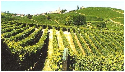 castiglione tinella moscato d'asti langhe e roero turismo vigne.jpg