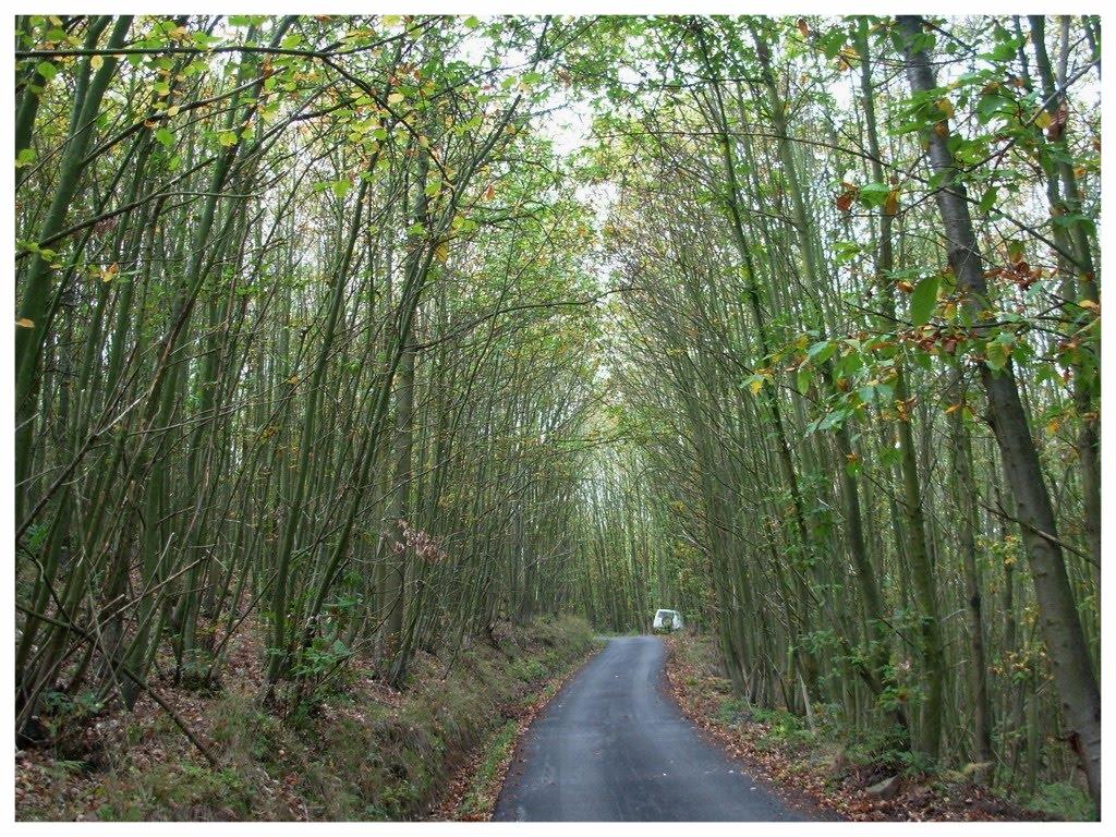 cravanzana comune piemonte langhe e roero turismo cosa vedere cosa fare itinerari percorsi tour dove dormire mangiare sagre eventi boschi.jpg