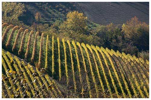 mango-vineyards.jpg