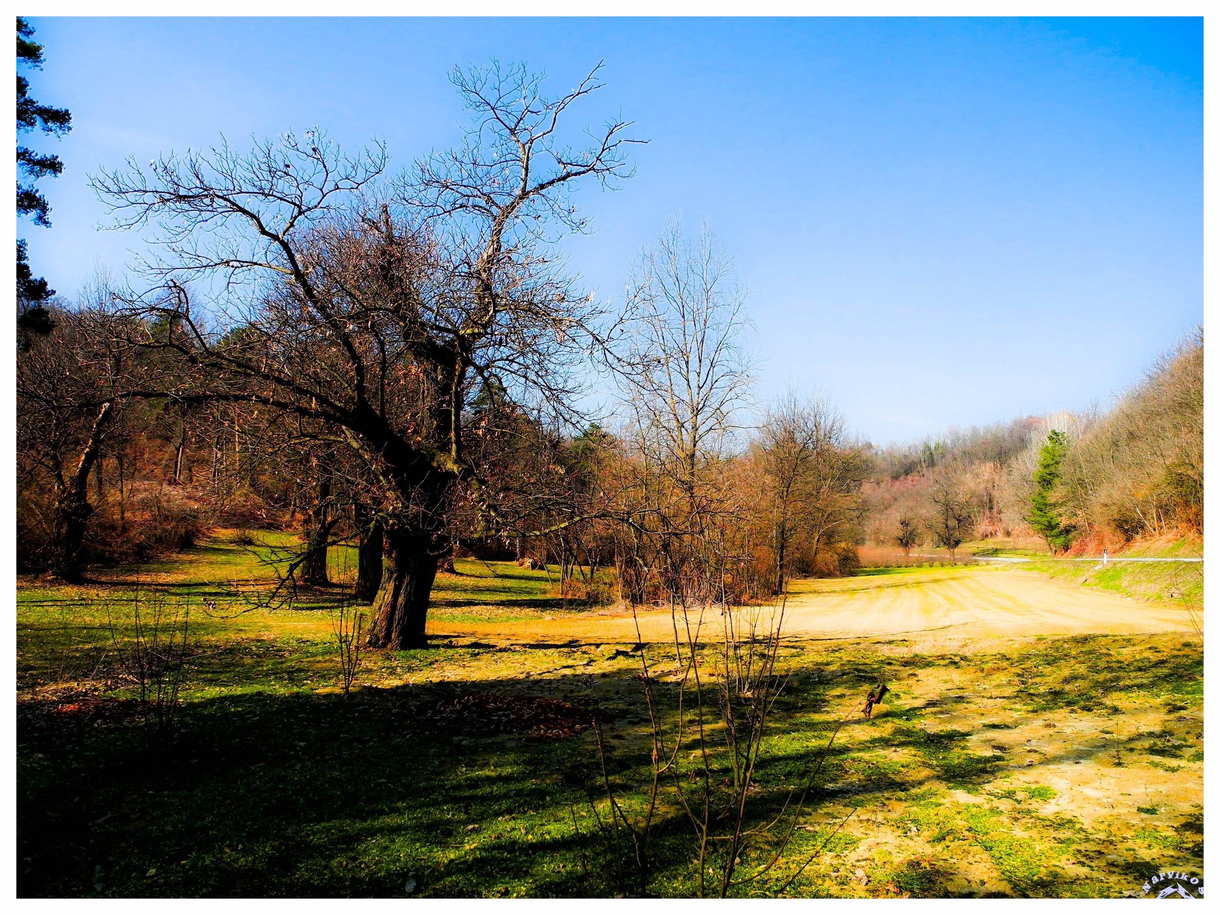 montaldo roero comune langhe roero piemonte viaggi itinerari tour in langa experience natura.jpg