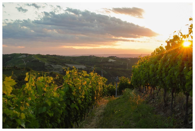 Paesaggio_di_Neviglie COMUNE LANGHE ROERO PIEMONTE TURISMO TOUR ITINERARI VISITA LE LANGHE VINI.jpg
