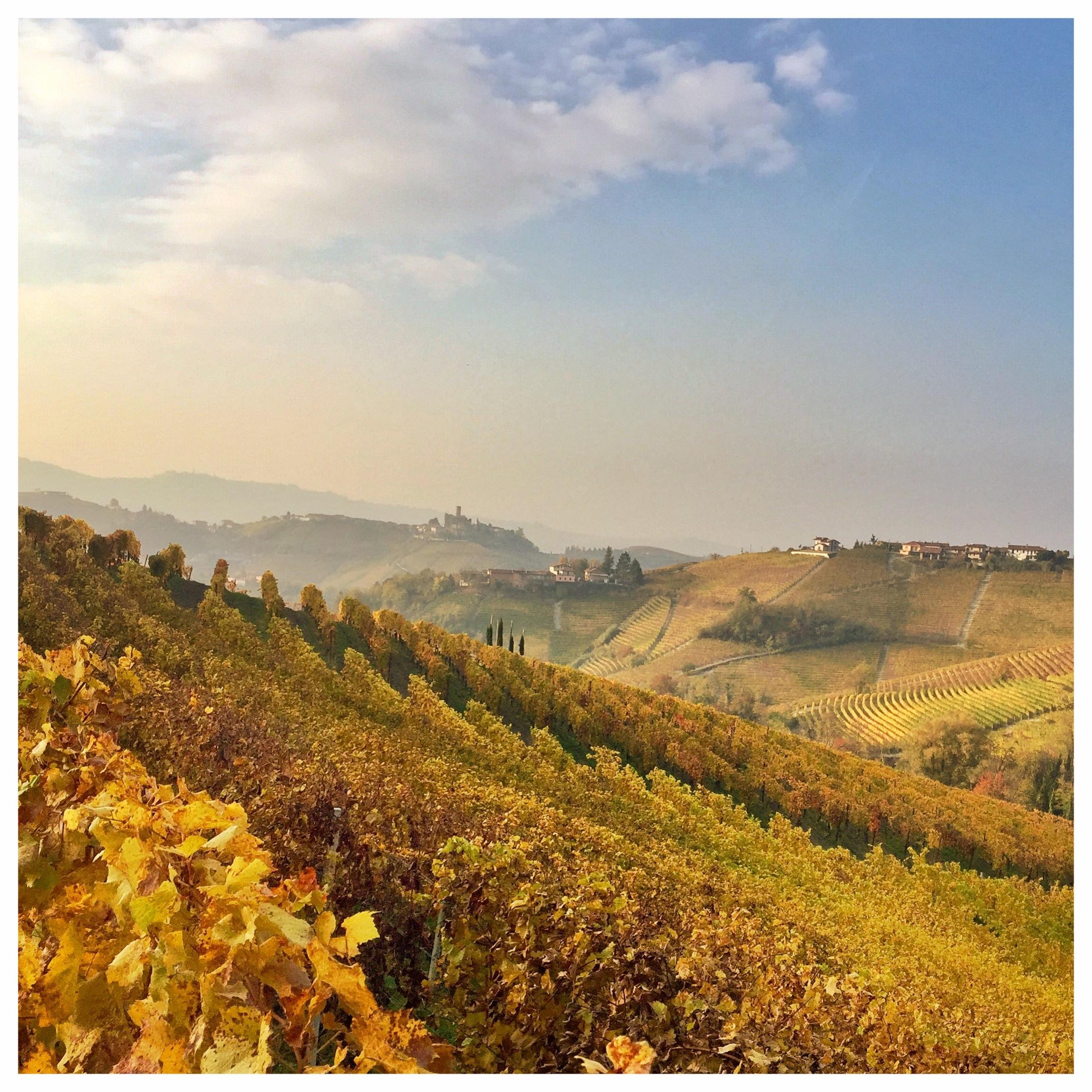 serralunga d'alba langhe roero piemonte turismo cosa vedere vigne.jpeg