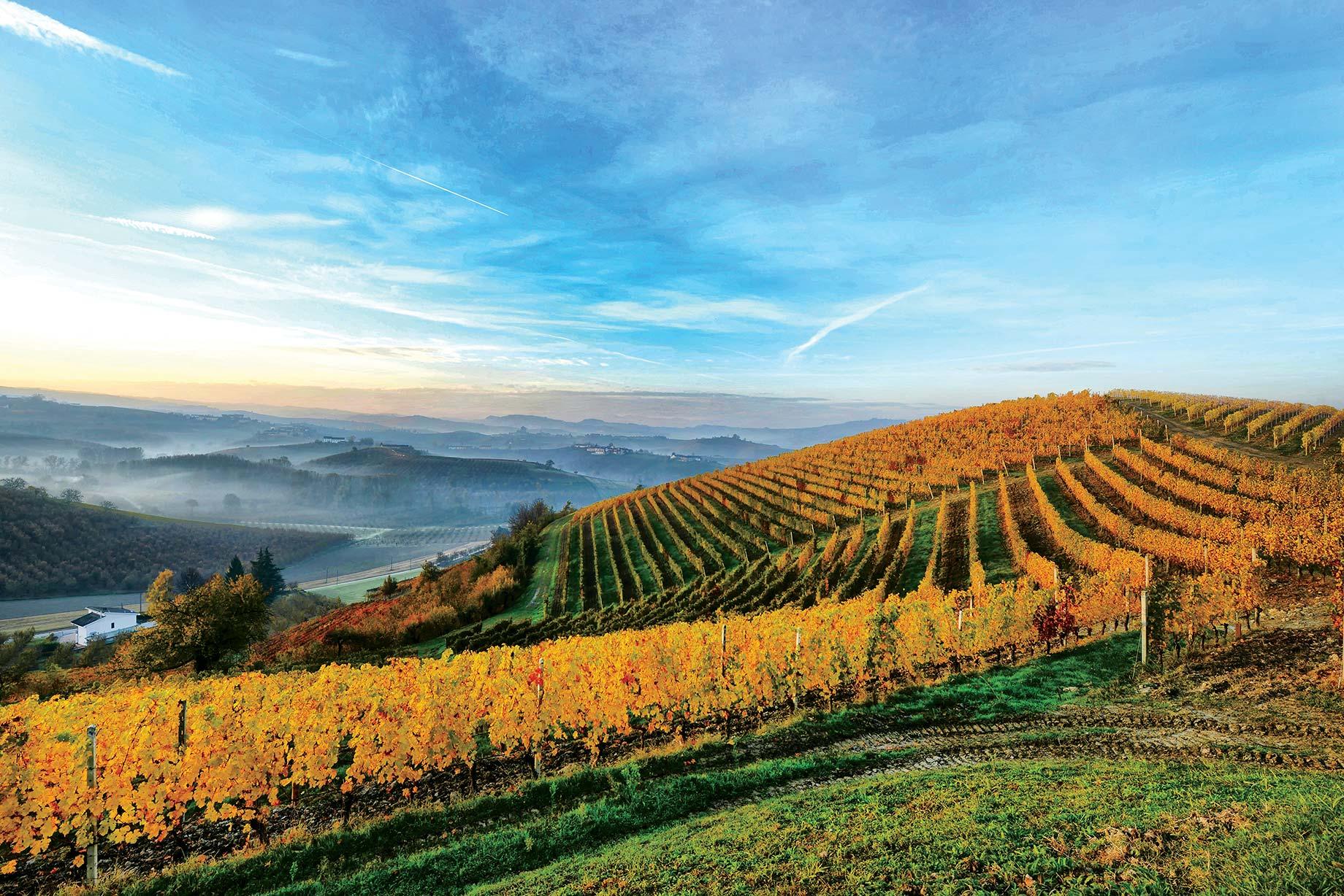 """Langhe e Roero: luoghi stupendi che l'Unesco descrive come:""""Una eccezionale testimonianza vivente della tradizione storica della coltivazione della vite, dei processi di vinificazione, di un contesto sociale, rurale e di un tessuto economico basati sulla cultura del vino""""""""I vigneti di Langhe-Roero e Monferrato - si legge nella motivazione ufficiale dell'iscrizione - costituiscono un esempio eccezionale di interazione dell'uomo con il suo ambiente naturale"""" -"""