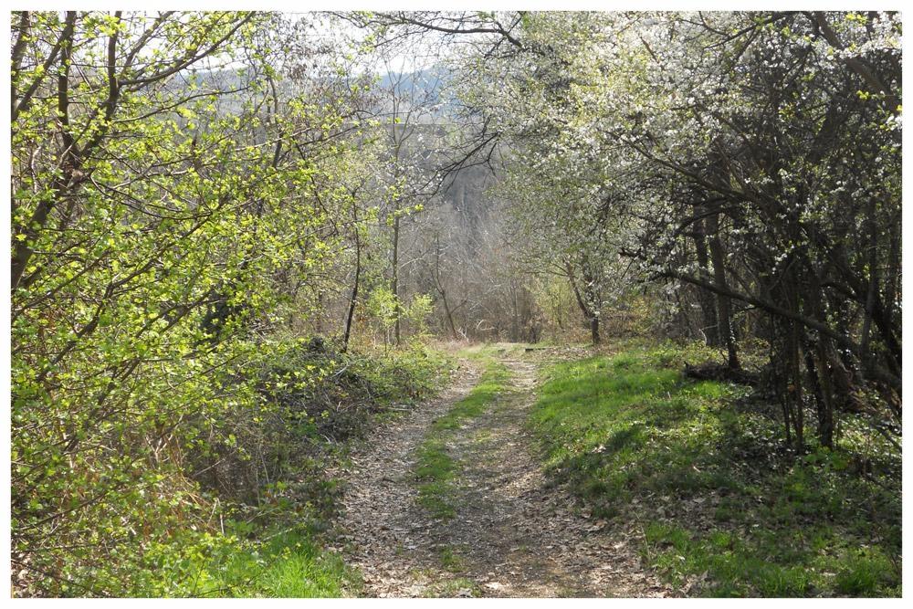 sentieri percorsi itinerari langhe e roero percorso apicoltura bra piemonte.jpg