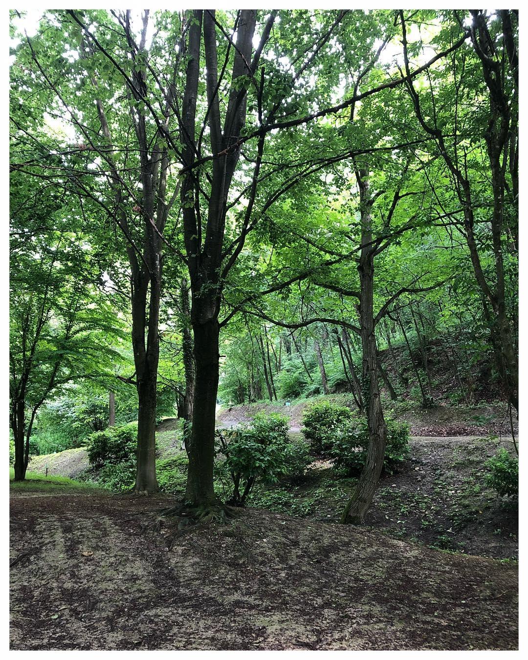 sentieri percorsi itinerari langhe e roero langa romantica bosco dei pensieri serralunga alba aforismi.jpg