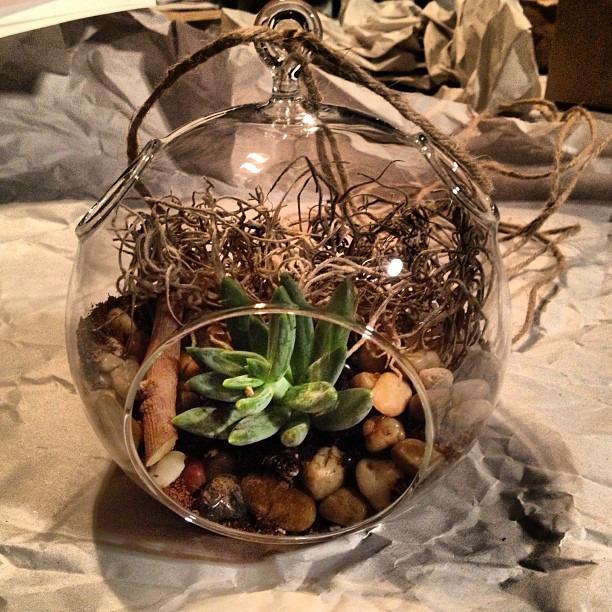 Ta da… Just put this little dude together #terrarium #succulent