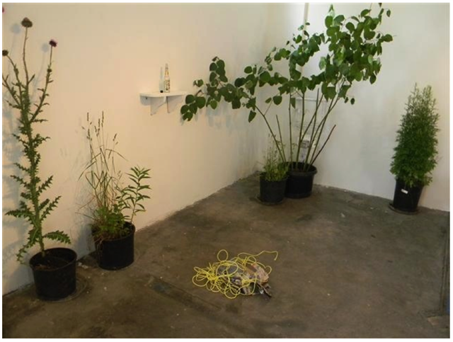 Throughout the duration of the exhibition potted beautiful plants among the weeds of Chicago that Vanessa Smith had foraged for, accentuated the space. They became Cobalt's house plants. On the closing Saturday of Hecho en Casa, Smith gave a will a tour of them to the visitors touching on the plants history, culinary and medical uses.