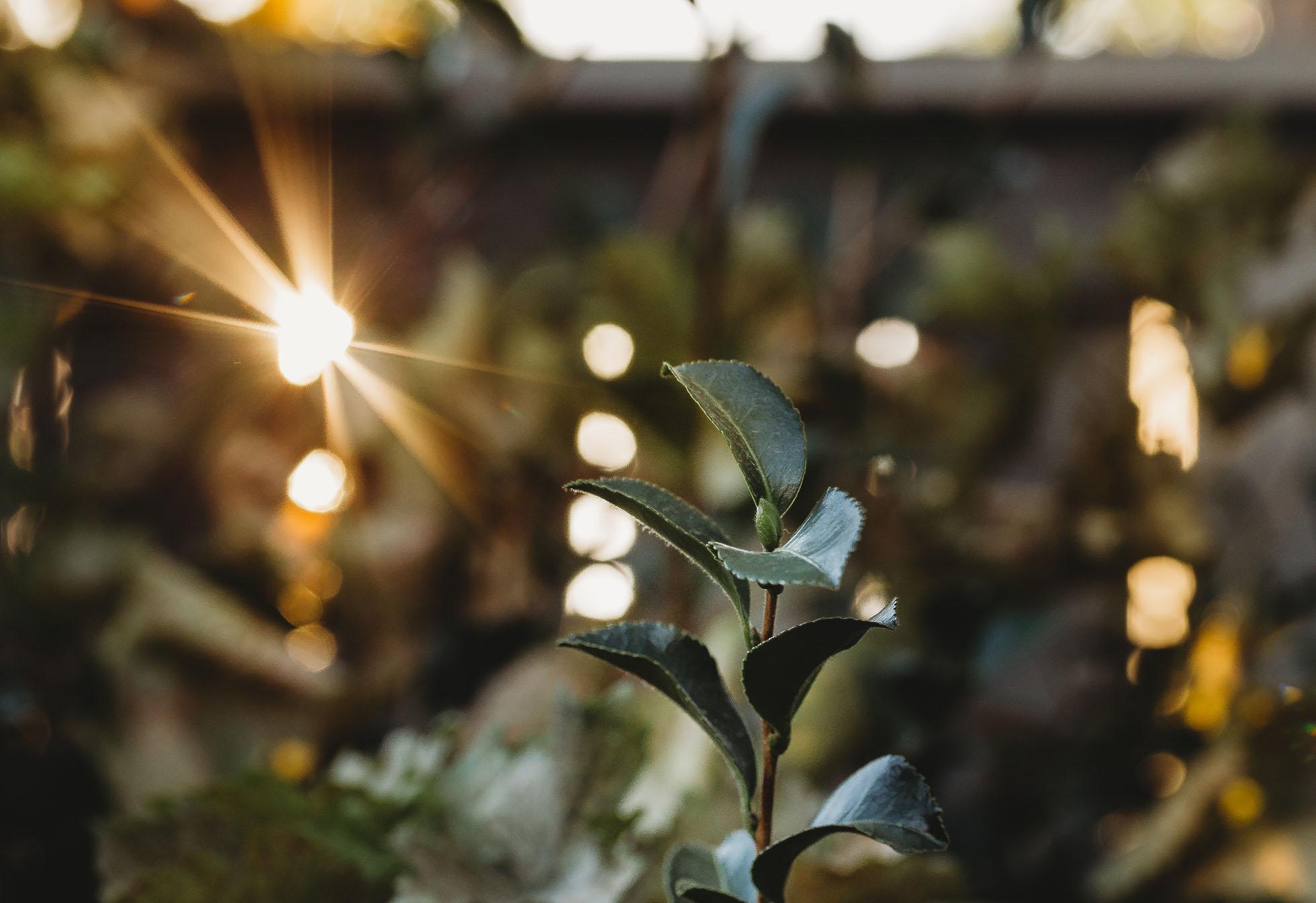 Light will always shine through.jpg