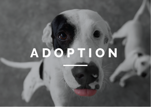 Our adoption program is designed to find responsible families for these pets where they can live long, healthy, and happy lives. Let us help you find your next forever friend.