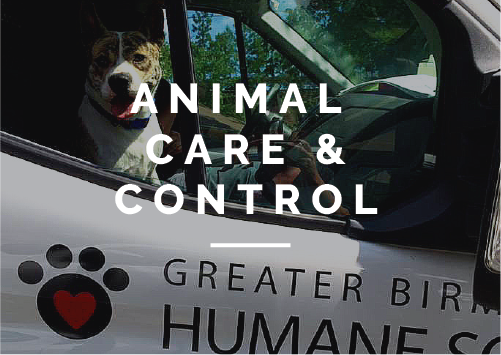 Since January 2015, our organization has provided Animal Care & Control services to Jefferson County. Learn more about ACC here.