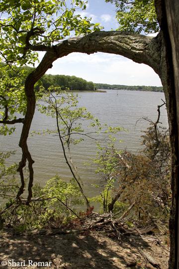 Quiet Waters Park vista