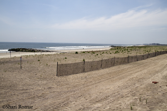 Arverne Piping Plover Nesting Area