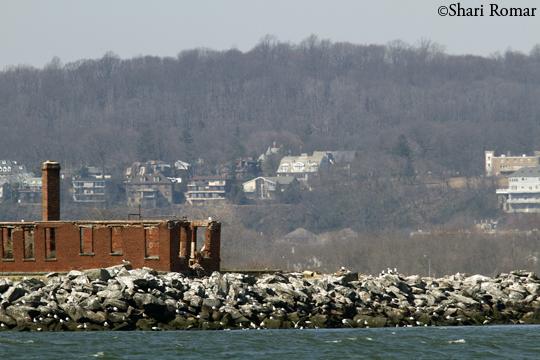 Swinburne Island and Staten Island (background)
