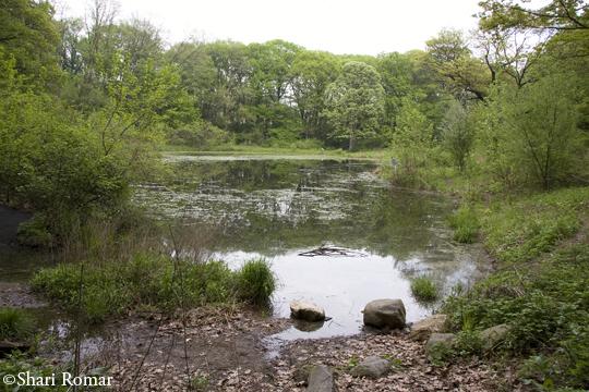 Forest Park, Strack's Pond