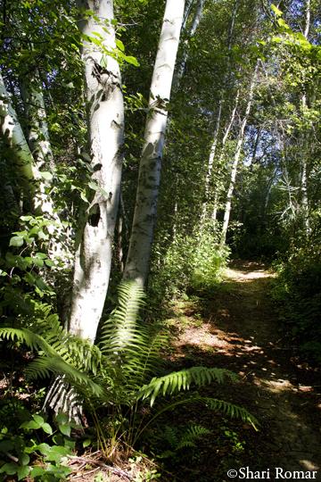 Jamaica Bay Wildlife Refuge woodlands