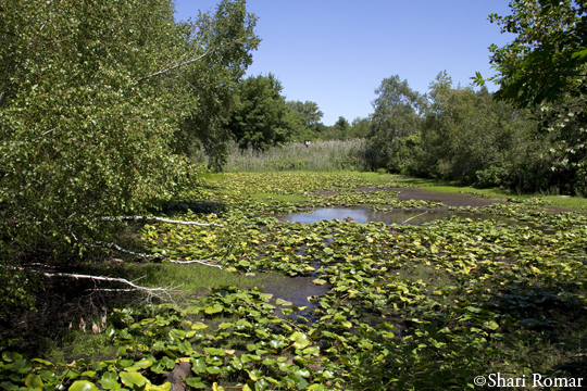 Big John's Pond, Jamaica Bay Wildlife Refuge