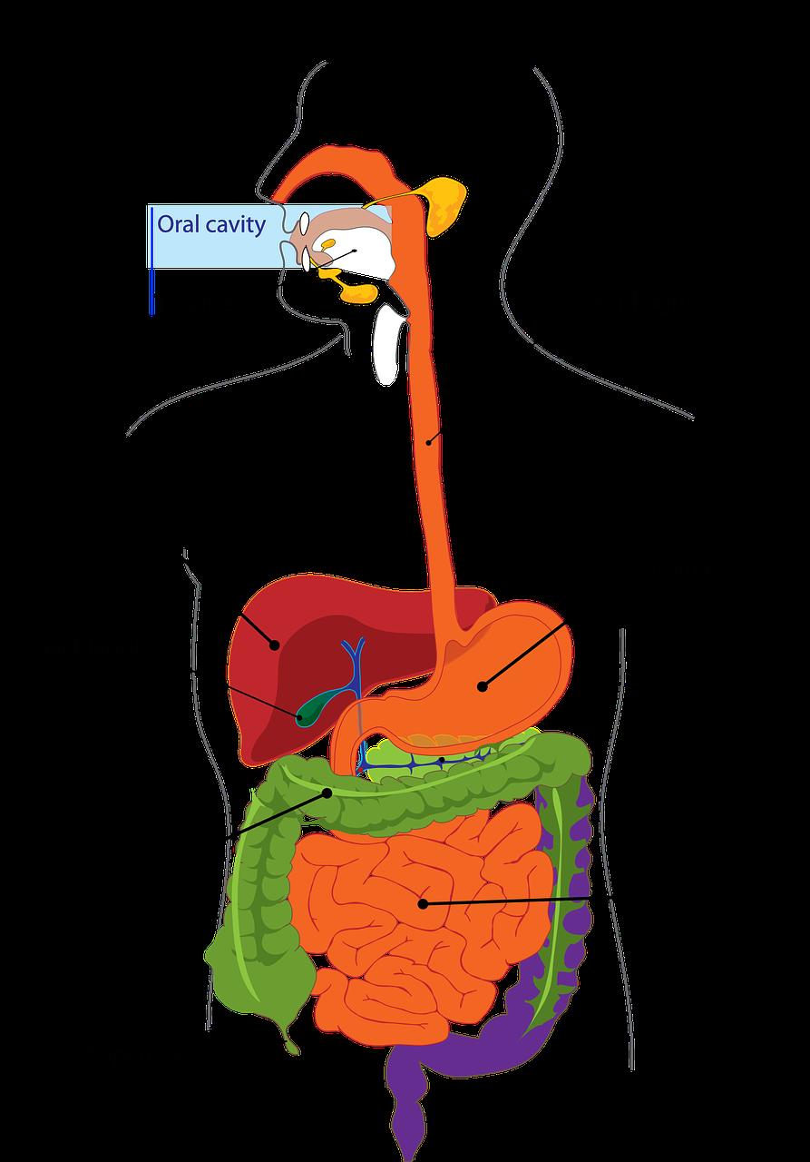 Foundations of Health Proper Digestion I'd Eat That Food