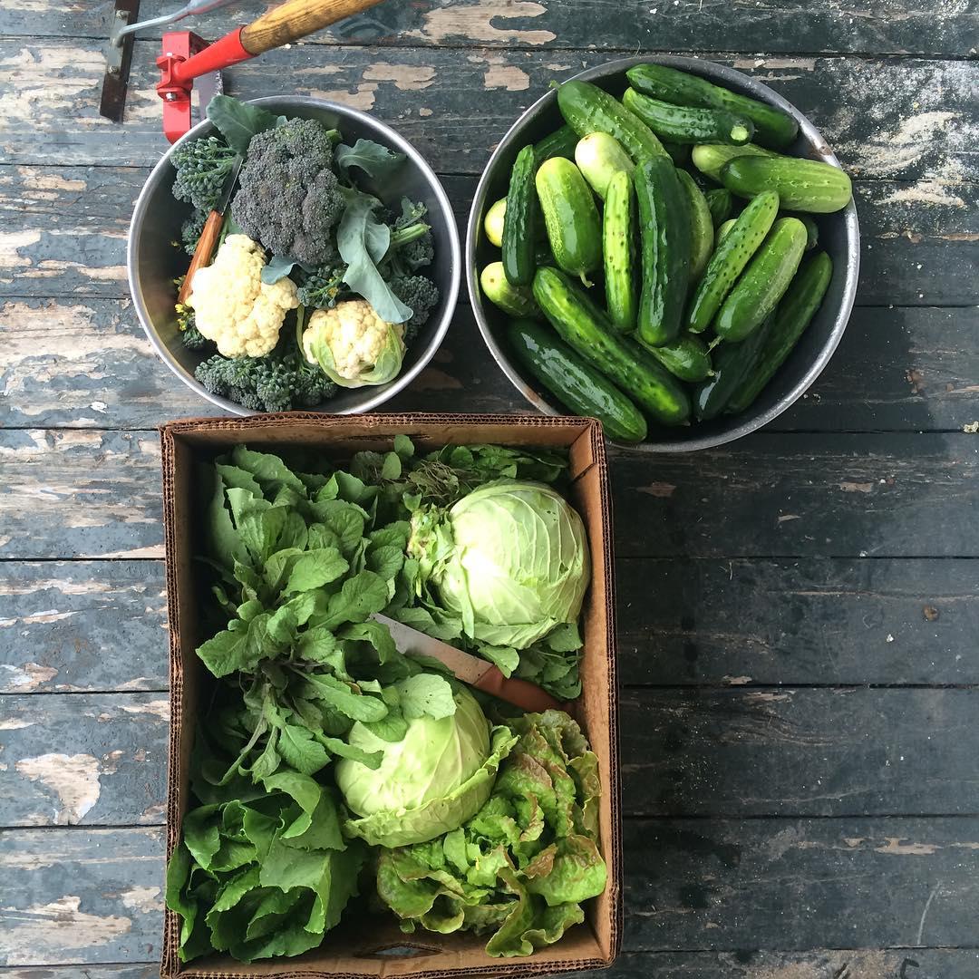 Farmstead Catering -- Farm fresh food from Echo Farm