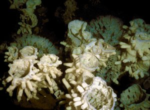 Sponge reef in Hecate Strait east of the Queen Charlotte Islands in British Columbia.