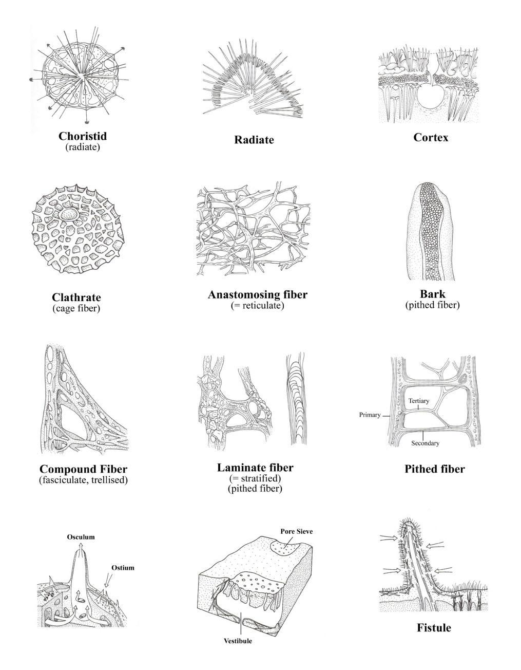 Skeletons page 3 copy.jpg