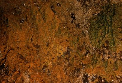 Halichondria panicea 2.jpg