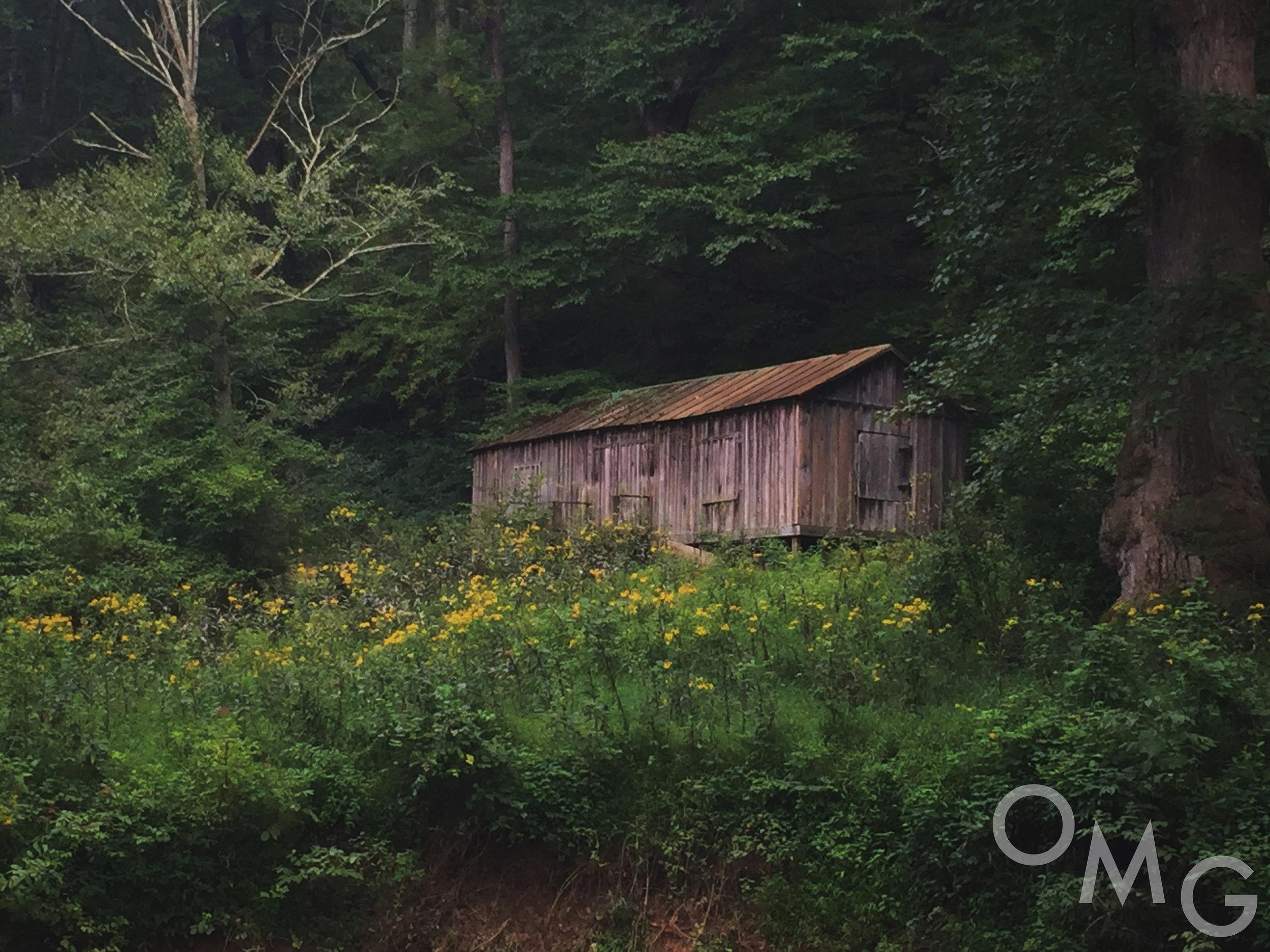 Abandoned Cabin copy.jpg