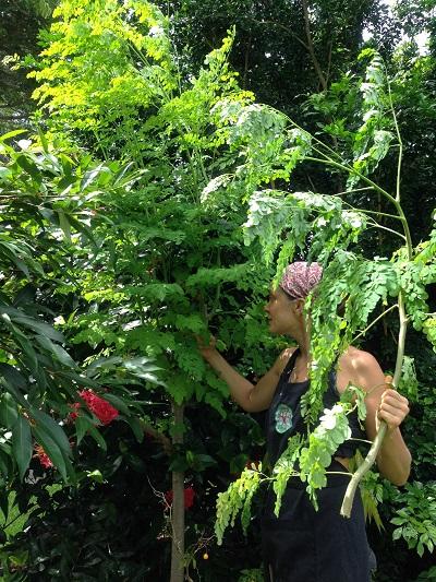 One of our Moringa trees