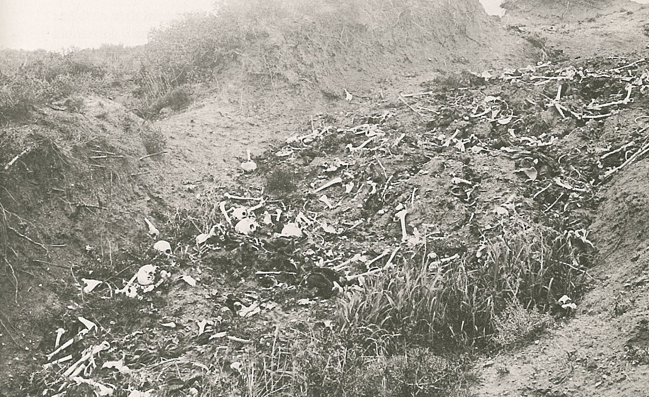 gallipoli-casualties.jpg