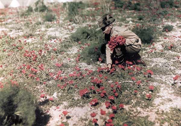 world-war-i-color-photo-anemones.jpg