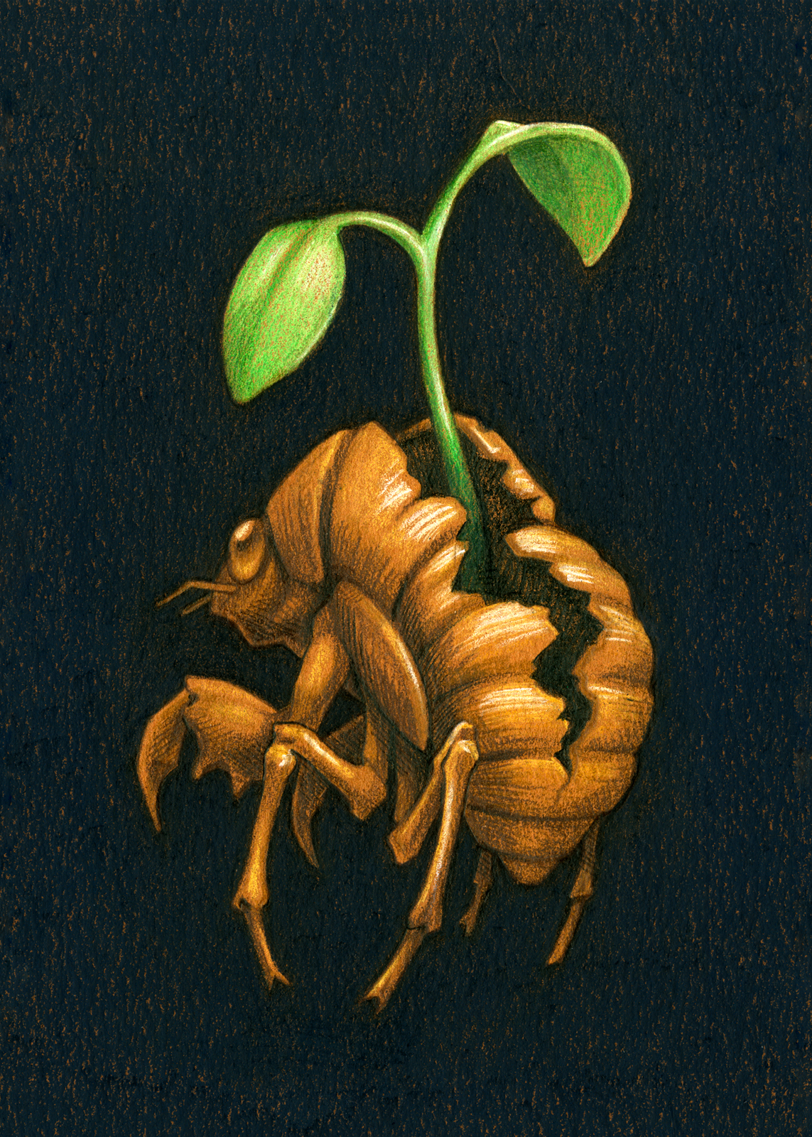 "colored pencil on paper, 5""x7"""