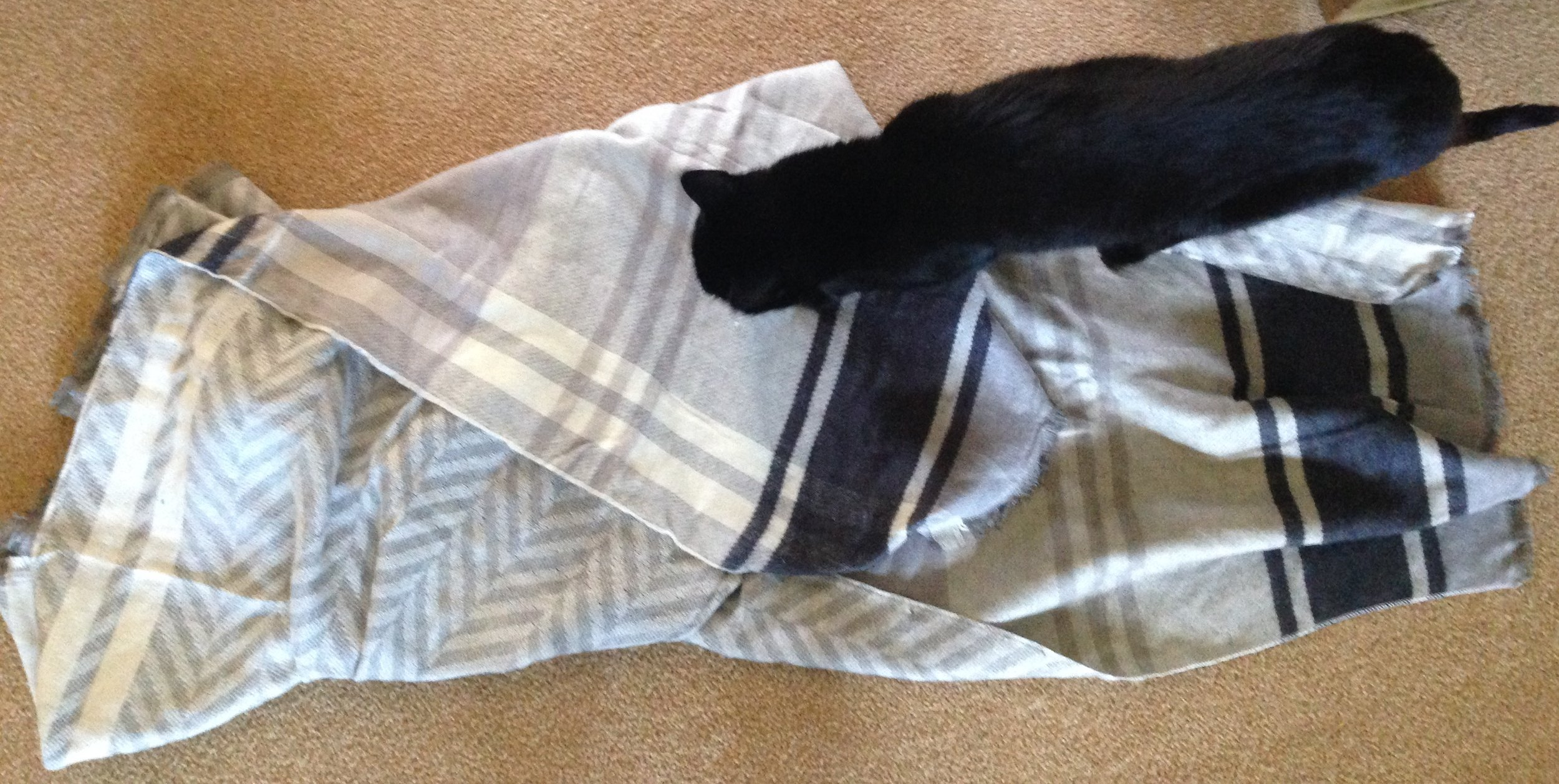 Showing the plaid and chevron sides of the scarf/poncho with a Blaze walking across. Cats love getting in the way.