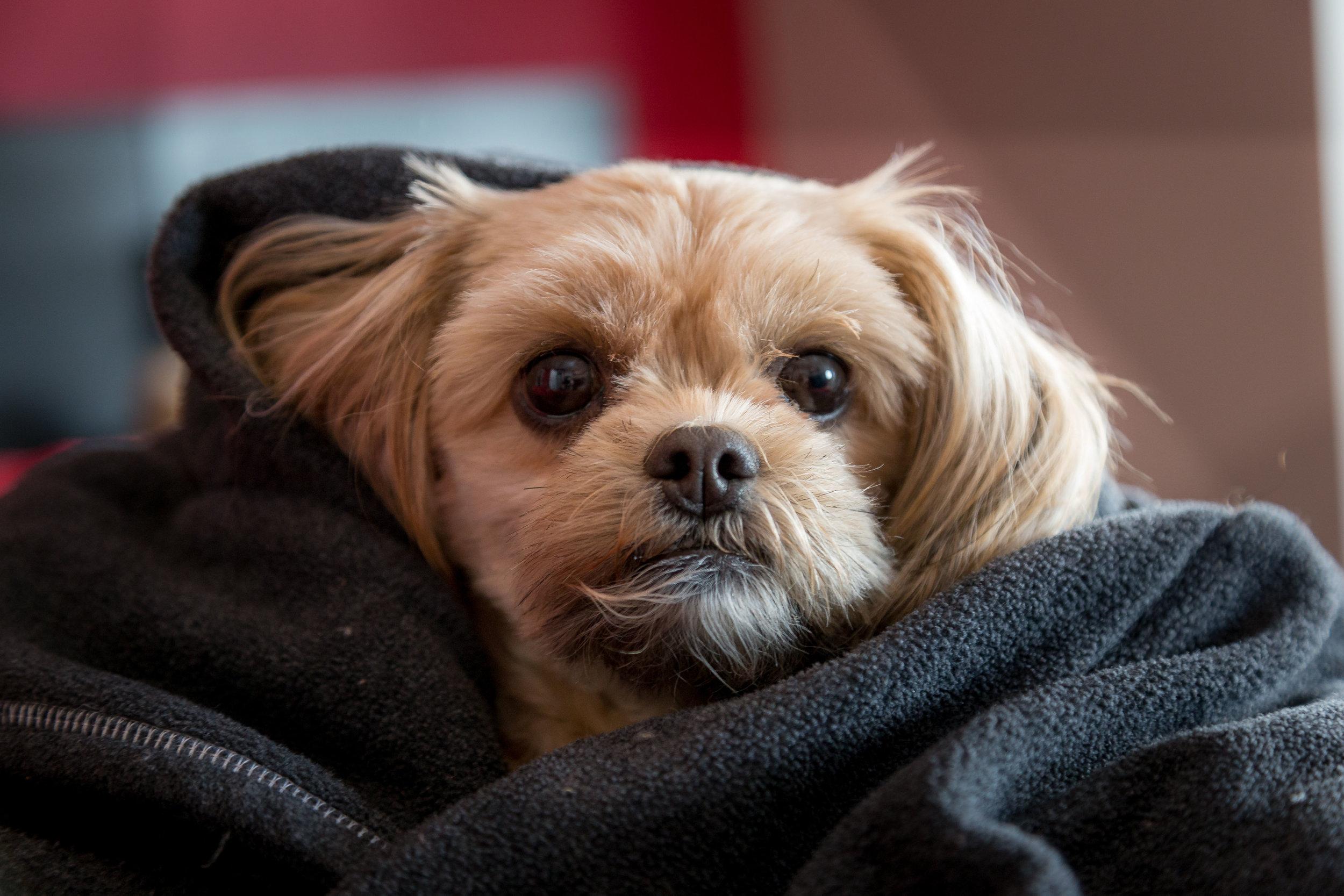 zen-puppy.jpg