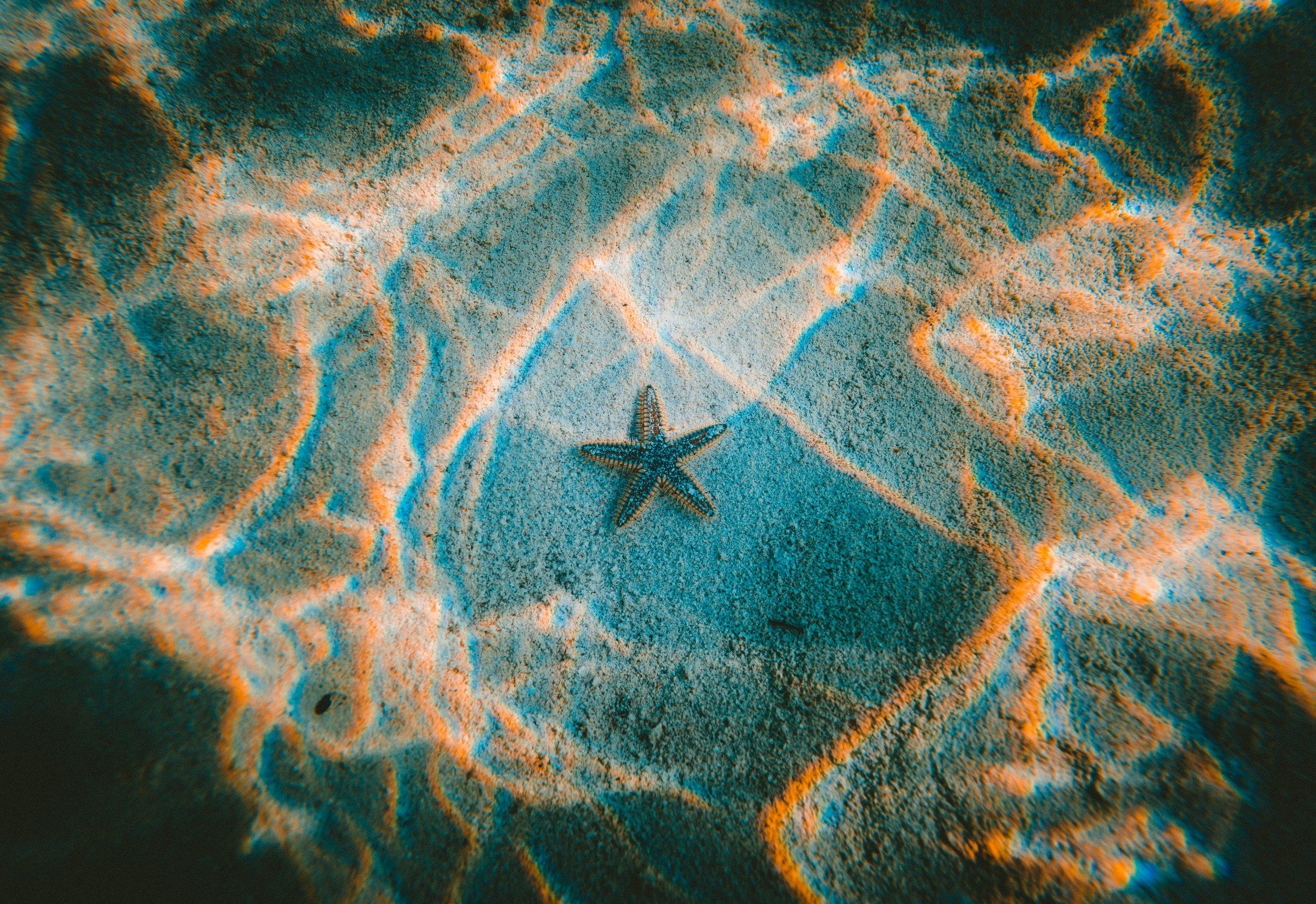 unique scholarships - beneath the sea