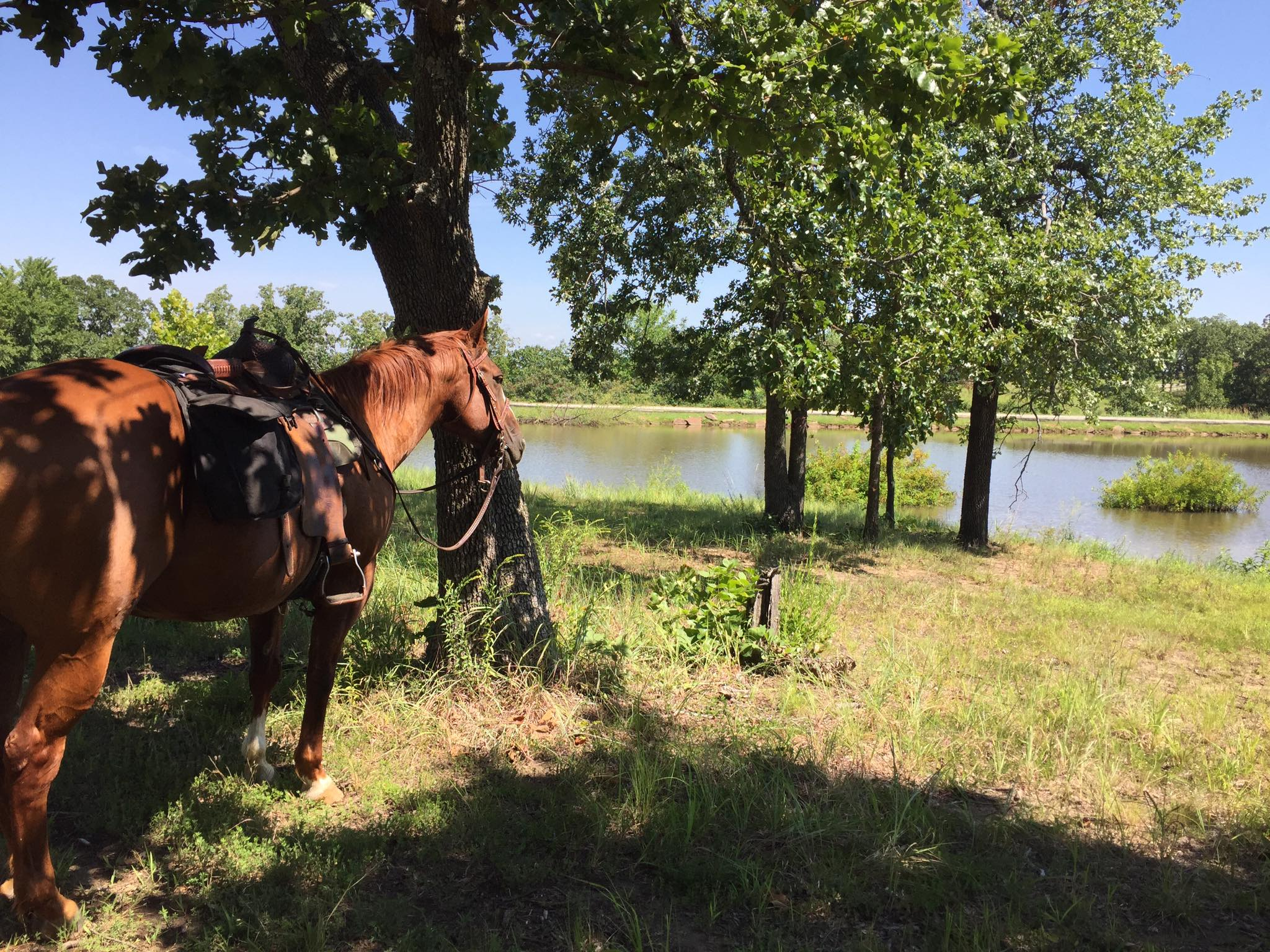 Dream Point Ranch Trail Rides 8.jpg