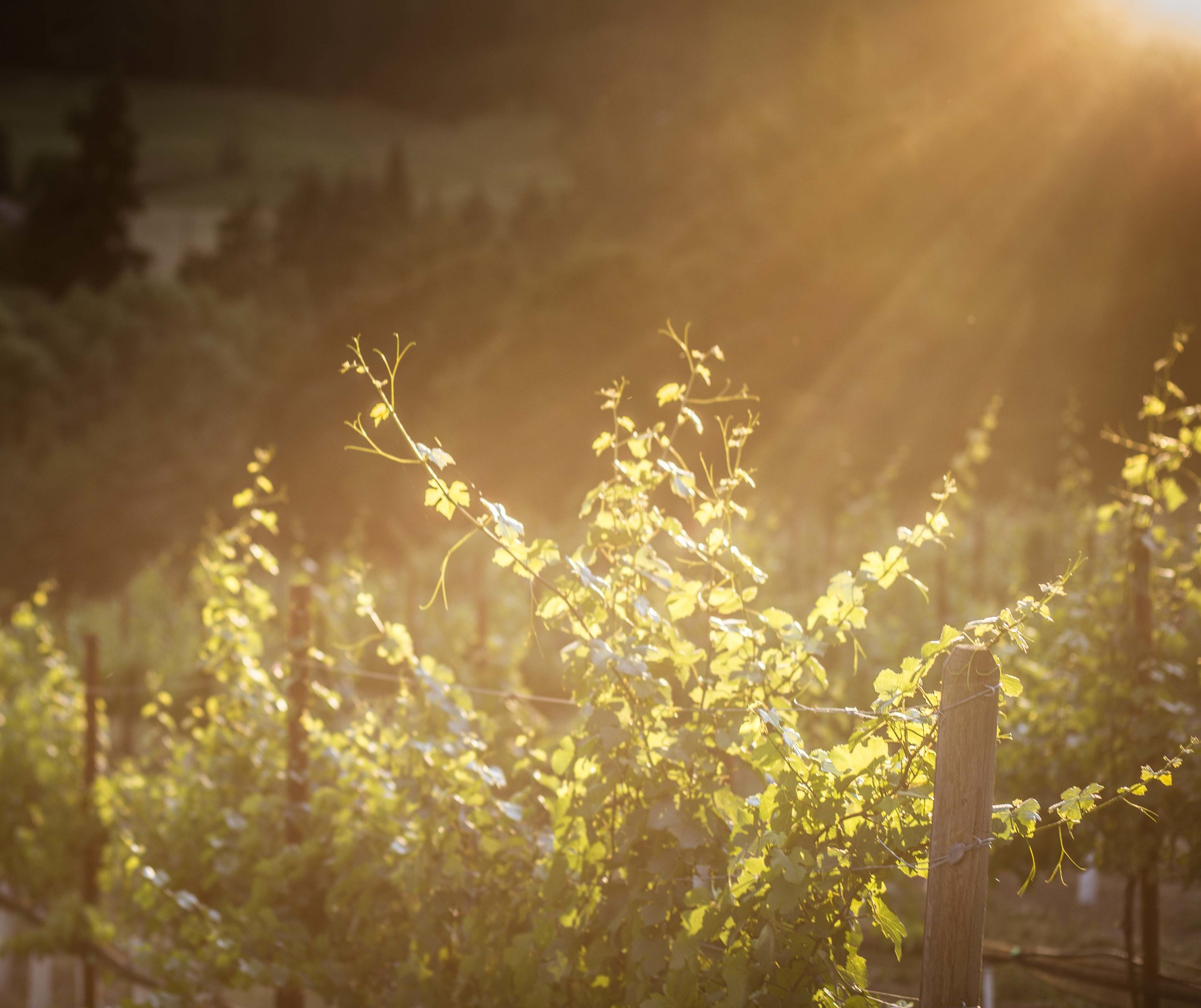 Hood River Wine Alliance Columbia Gorge Wine Mt.Hood Vinyards things to do vacation beautiful scenic fruit loop wine_-20.jpg