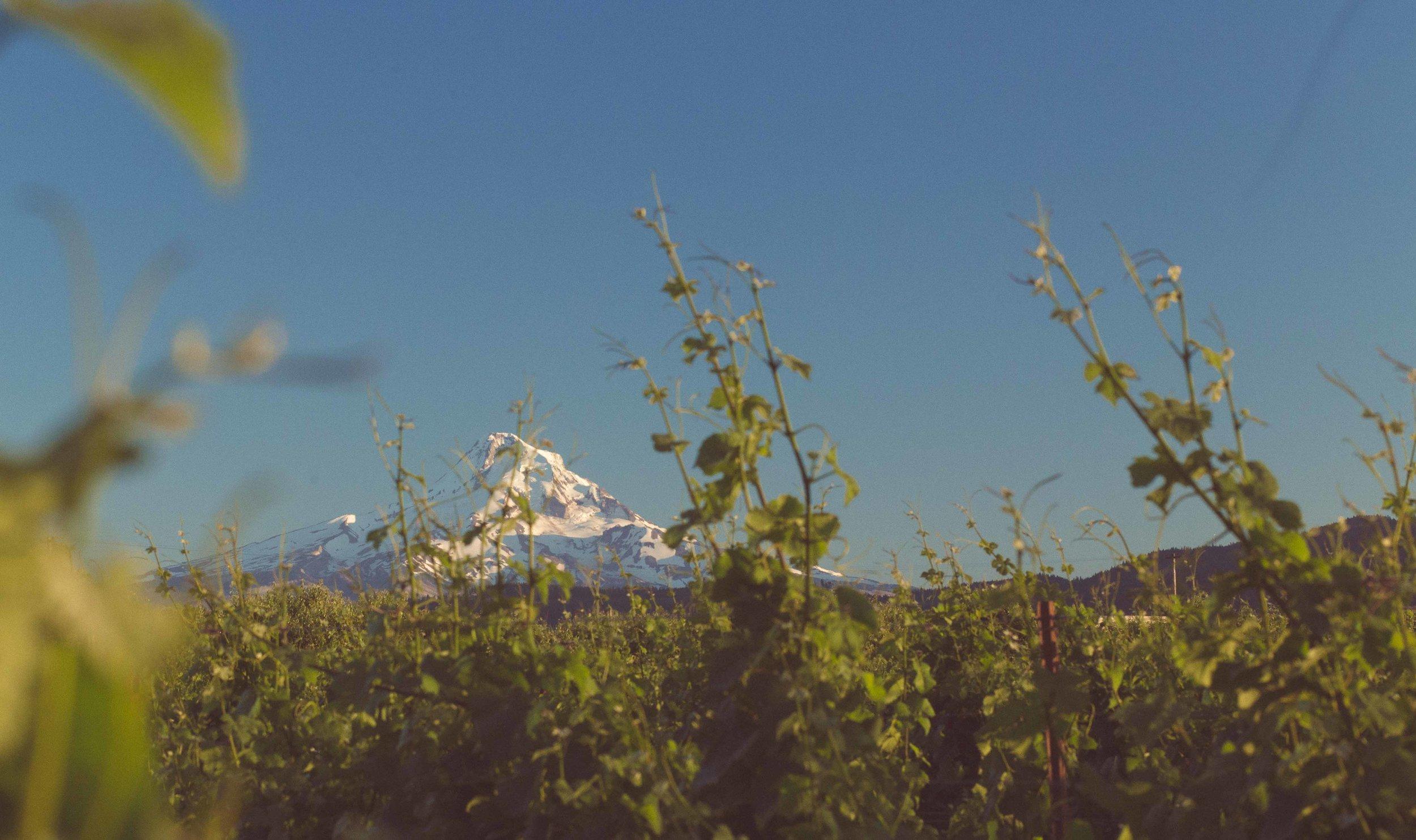 Hood River Wine Alliance Columbia Gorge Wine Mt.Hood Vinyards things to do vacation beautiful scenic fruit loop wine_-7.jpg