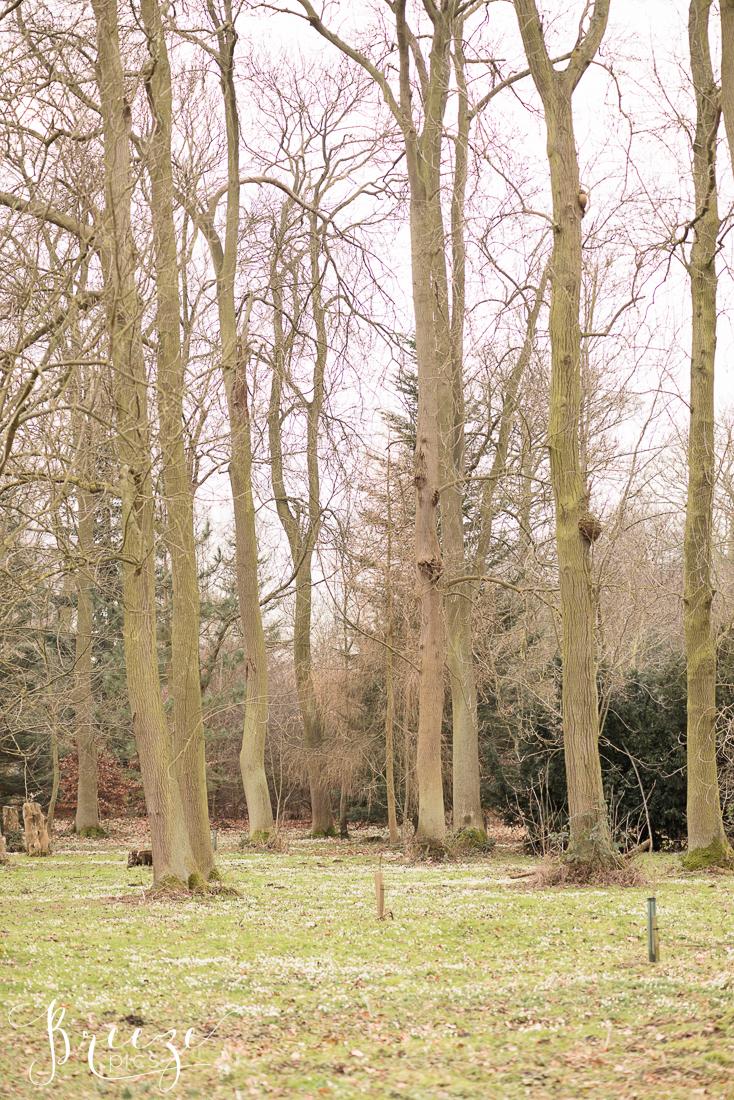 Snowdrops-2483-Ed.jpg
