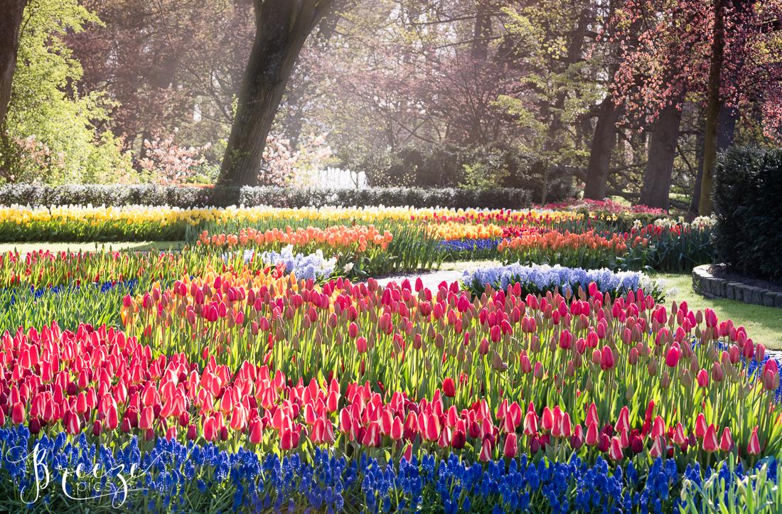 Tulips and Flowers in Keukenhof Gardens, Netherlands, Holland, Breeze Pics, Bernadette Meyers