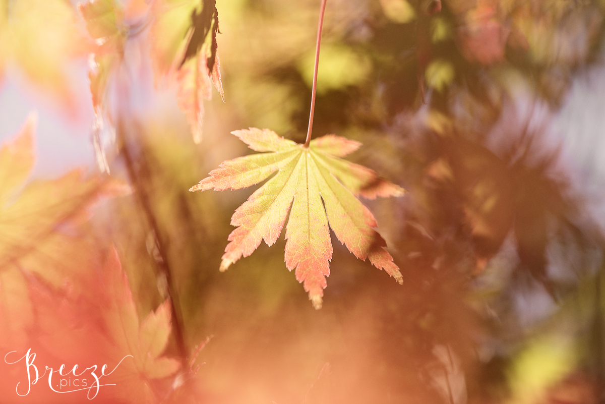 Sunlit Autumn Leaves, Nature Photograph, Limited Edition Wall Print, Bernadette Meyers