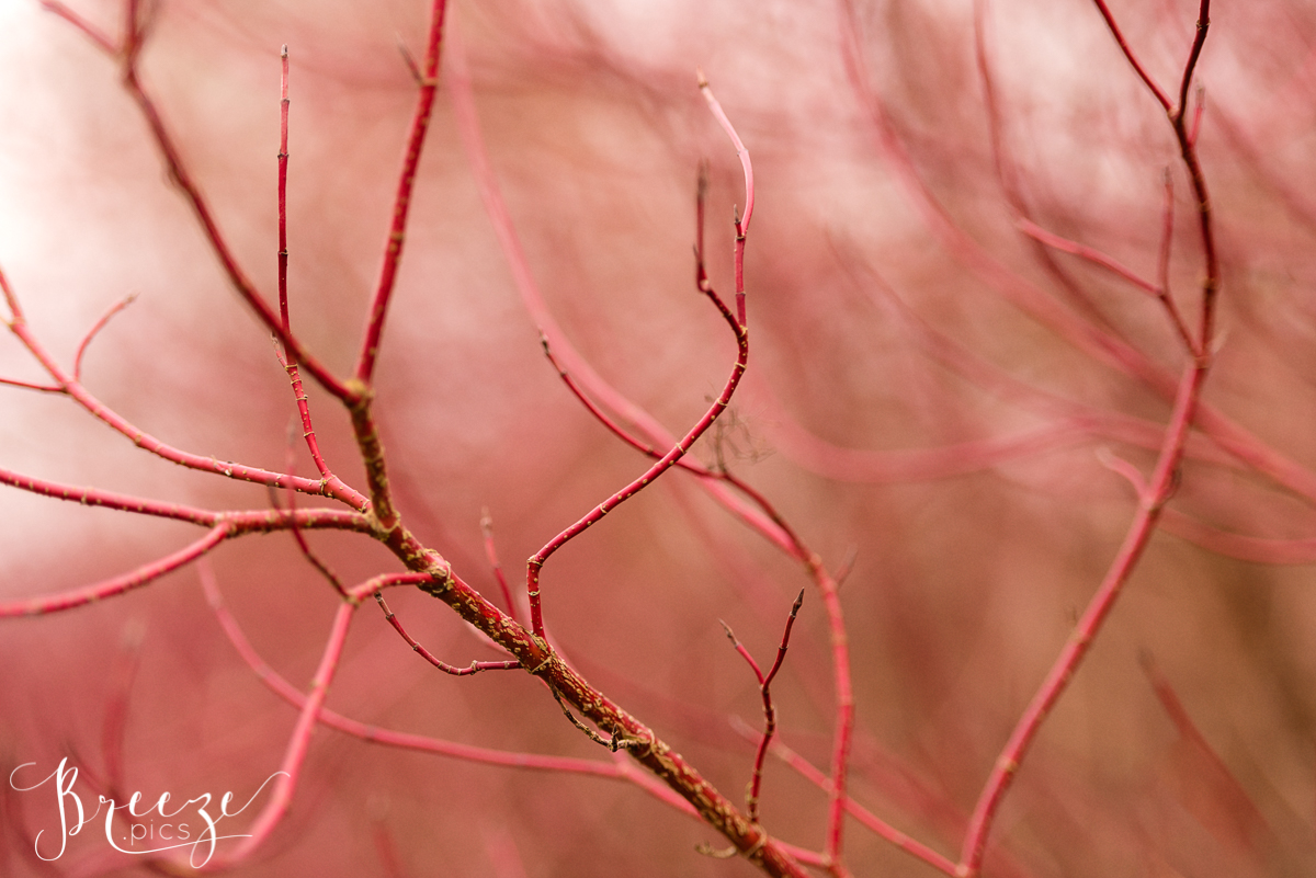 Curvy Autumn Stems, Red, Nature Photography, Home Wall Art, Breeze Pics