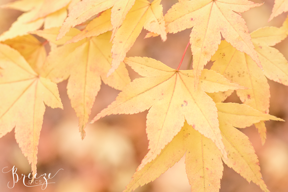 Autumn Leaf Detail, Macro Nature Photography, Fine Art Print, Breeze Pics