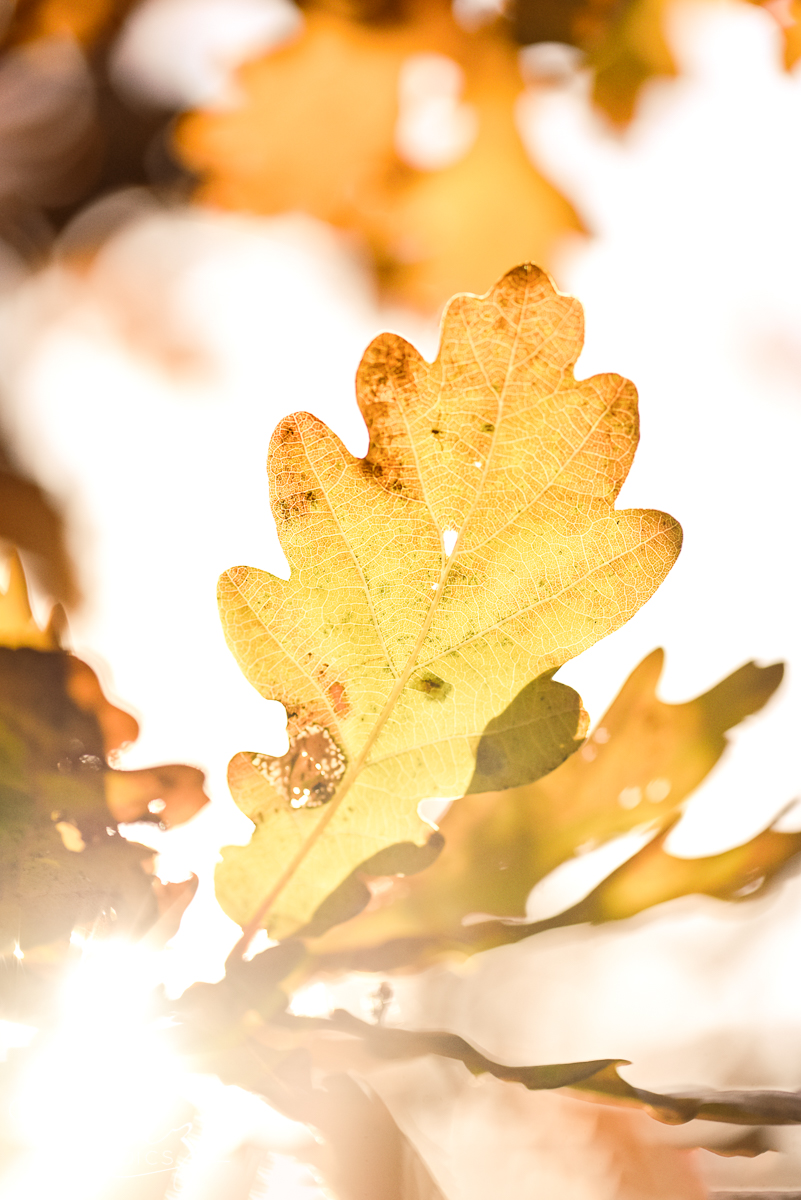 Autumn Leaves Macro Photography, Home Decor Print, Bernadette Meyers
