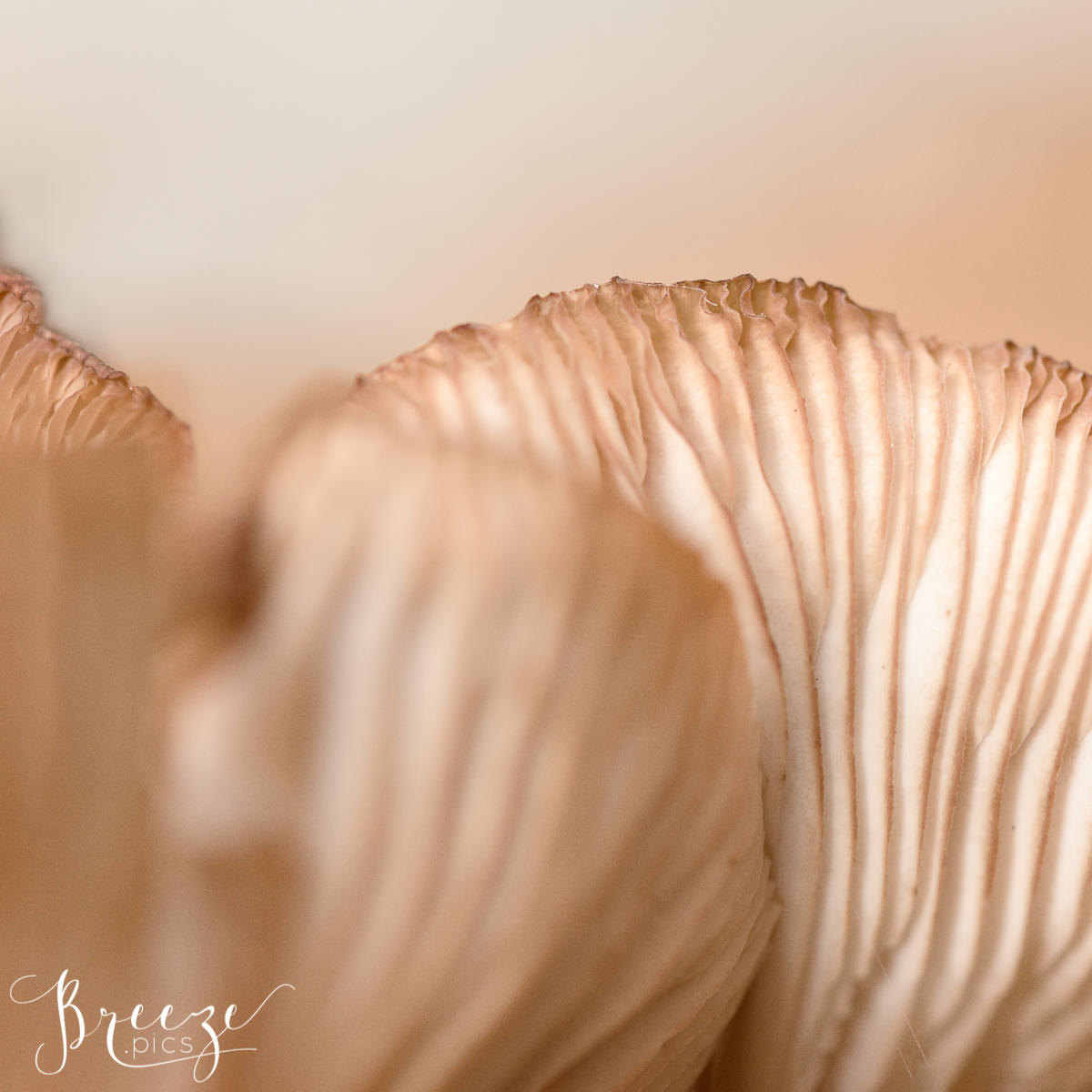 Autumn Macro Nature Photograph, Limited Edition Fine Art Print, Bernadette Meyers